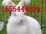 养殖场直销肉兔 种兔獭兔价格 免费提供种兔养殖技术