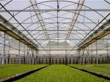 想买质量好的流滴膜就到玉兰花塑料制品-消雾膜价格