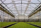 加工各种塑料大棚膜,价格合理的农膜玉兰花塑料制品供应