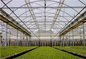 好的农膜市场价格 加工各种塑料大棚膜