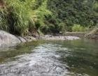 千岛湖云清溪水农庄,坐拥森林氧吧呼吸无限的负离子