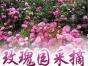 玫瑰采摘园马嵬驿一日游