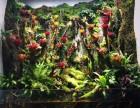长沙生态大型雨林缸/鱼缸/枯山水定制维护找植来植趣