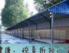 纯正日本柴犬 北京柴犬 培育高品质日本柴犬