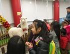 上海松江区神兽租赁-驼羊转租-草泥马出租-房地产展览庆典暖场