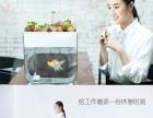 鱼菜共生鱼缸 不换水的鱼缸 不浇水的花盆