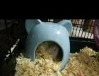 出小仓鼠。跑轮。陶瓷窝,厕所