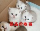 辽宁省内最高价收猫 沈阳最大实体店