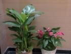 上海浦东专业花卉租赁绿植租摆植物租赁全城配送服务