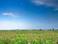 红色花海激情俄木塘草原