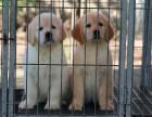 郑州到哪里买狗比较有保障郑州哪里有卖金毛犬