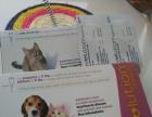 自家繁育美国短毛猫宝宝公母都有保证健康保证纯度