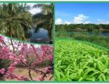 深圳湖尔美农场收费标准及其它农家乐不一样的游玩体验项目介绍