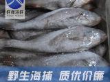 鲜缘 舟山海鲜 冷冻米鱼 鲜活野生冰冻鳘鱼 鱼海产品批发4-6