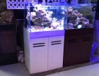 专业鱼缸清洗维护.安装搬运.维修布景