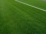 北京園林綠化公司草坪月季花竹子黃楊丹麥草批發零售運輸鋪種
