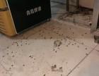 惠州惠阳上杀除虫灭鼠专业饭店餐厅家庭灭蟑螂灭老鼠