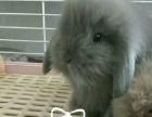 小兔JieRuide店