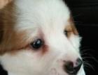 串串宠物狗。