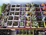 张家口市万全区孔家庄镇批发零售各种多肉植物