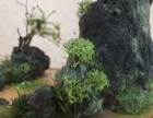 微型山水盆景(一树梨花)