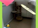 朝陽三元橋家庭環境寵物寄養單獨寄養包月寄養散養托管