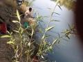 120亩天然野生鱼垂钓园生态自然环境优美大鱼多
