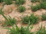 广东肇庆什么草籽撒在土上就能长