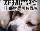 大型犬死了怎么处理 深圳宠物安葬