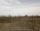 台安红树莓土地转让