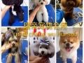 专业宠物洗澡美容、美容师培训、宠物用品批发零售