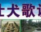 鹿山名仕犬歌训犬学校