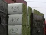 出售美国进口特级ACX 安德森牧草 港口现货