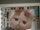 各种品种猫出售有加菲折耳美短英短。