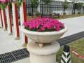 深圳龙华庭院绿化 绿植生态墙 屋顶绿化