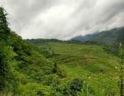 彝族自治县万坪乡冷其村1800亩林地转让,通公路