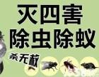 东莞白蚁防治 杀虫灭鼠 免费检查