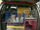 洛阳宠物托运,新郑机场:宠物运输到全国各地