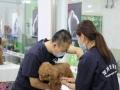 大连宠物美容师培训 标准精英班限时抢购 小班教学