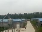 岱岳区周边 岱岳区房村镇磨山芋村 厂房 70000平米