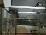 卖鱼缸和凤尾鱼!