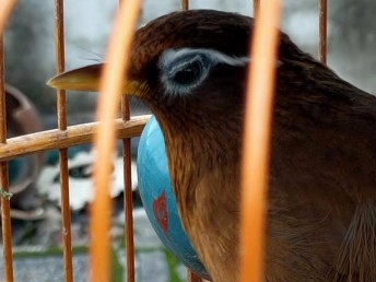 畢節鳥出售可以快遞克數大