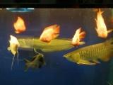 热带鱼,鹦鹉鱼,成吉思汗鲨