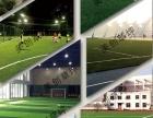美创研发足球草休闲草景观草十年制造,值得信赖!
