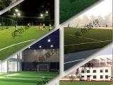美创研发足球草休闲草景观草十年制造,值得信赖