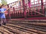 阜平建筑木方绿化竹竿