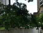 金贸西路 惠富达公寓 文华菜市场 交通方便 生活设施完善