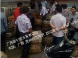 贵州鸡苗批发市场,价格合理的贵阳土鸡苗东升禽苗孵化公司供应