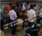 想买珍珠鸡苗当选东升禽苗孵化公司-广西鸡苗批发市场
