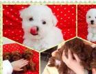 福州较大的犬舍,有实体宠物店,出售世界名犬